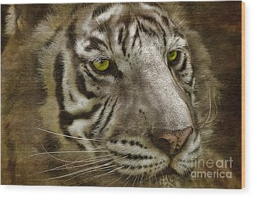 White Bengal Wood Print by Lois Bryan