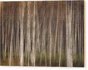 White Birch Abstract Wood Print by John Vose