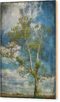 White Birch In May Wood Print by Lois Bryan