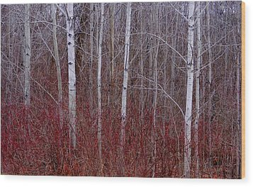 White Birch In The Adirondacks Wood Print by Karen Molenaar Terrell