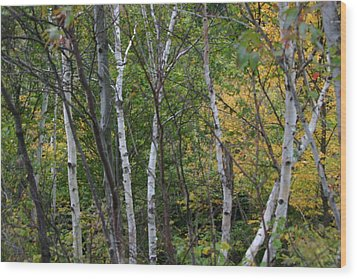 White Birches In The Woods Wood Print by Denyse Duhaime