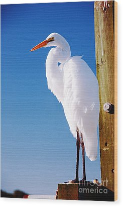Great White Heron Wood Print by Vizual Studio