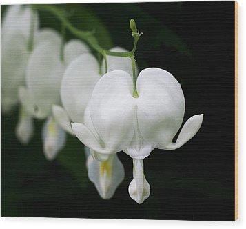 White Bleeding Hearts Wood Print by Rona Black