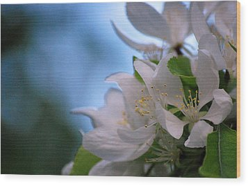 White Blooms Wood Print by Amee Cave