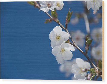 White Blossom Wood Print by Anne Gilbert
