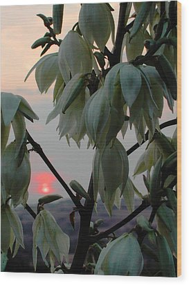 White Blossom Sunset Wood Print by Dorothy Berry-Lound