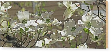 White Blossoms Wood Print by Barbara McDevitt