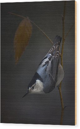 White Breasted Nuthatch Wood Print by Ron Jones