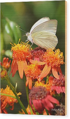 White Butterfly On Mexican Flame Wood Print