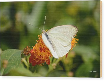 Wood Print featuring the photograph White Butterfly On Mexican Flame by Debra Martz