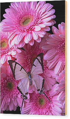 White Butterfly On Pink Gerbera Daisies Wood Print by Garry Gay