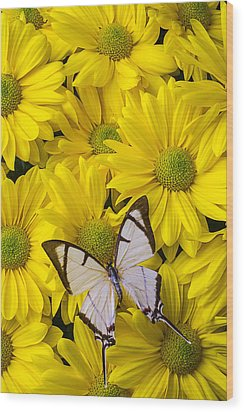 White Butterfly On Yellow Mums Wood Print by Garry Gay