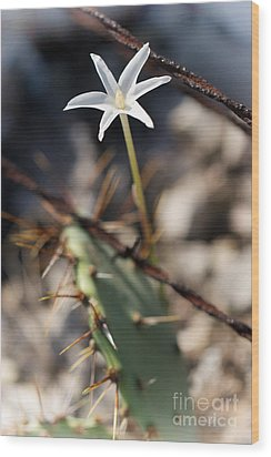 Wood Print featuring the photograph White Cactus Flower by Erika Weber