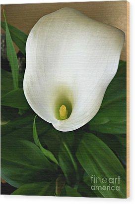 White Calla Lily Wood Print by Addie Hocynec