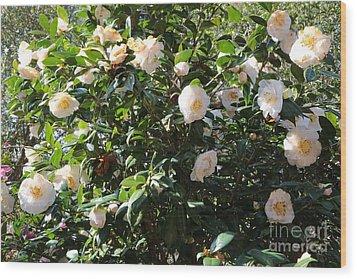 White Camellias Wood Print by Carol Groenen