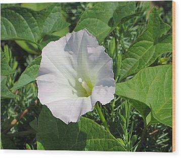 White Candour Wood Print by Sonali Gangane