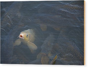 White Carp In The Lake Wood Print