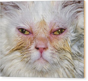 Scary White Cat Wood Print