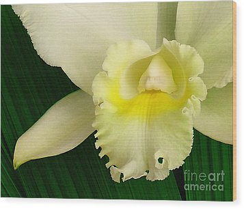 White Cattleya Orchid Wood Print by James Temple
