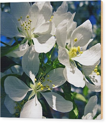 White Cherry Blossoms In The Spring Wood Print by Julie Magers Soulen