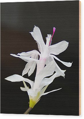 Wood Print featuring the photograph White Christmas Cactus by B Wayne Mullins