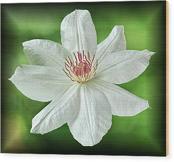 Wood Print featuring the photograph White Clematis by Richard Farrington