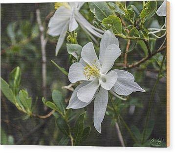 White Columbine Wood Print by Aaron Spong