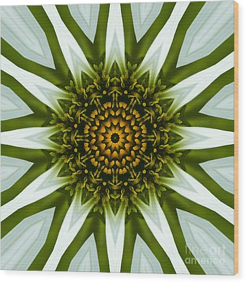 White Coneflower Mandala 12 Wood Print