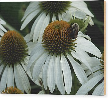 Wood Print featuring the photograph White Coneflowers  by James C Thomas