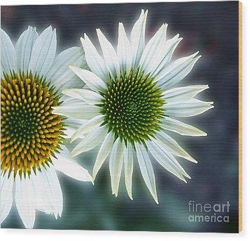 White Conehead Daisy Wood Print