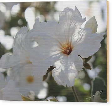White Cordia Wood Print by Kume Bryant