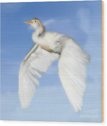 White Crane Wood Print by Raymond Earley