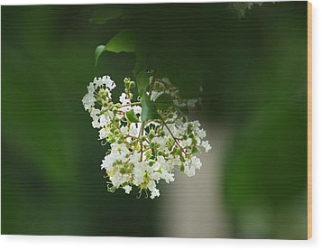 Wood Print featuring the photograph White Crepe Myrtle Blossom by Suzanne Powers