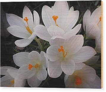 White Crocuses Wood Print