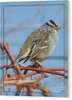 Wood Print featuring the photograph White Crowned Sparrow by Heidi Manly
