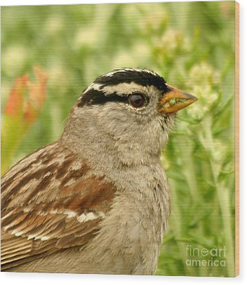 White Crowned Sparrow Portrait Wood Print by Bob and Jan Shriner
