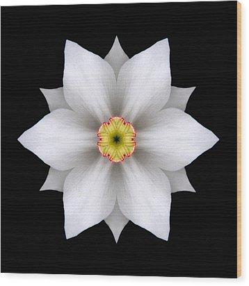 White Daffodil II Flower Mandala Wood Print by David J Bookbinder