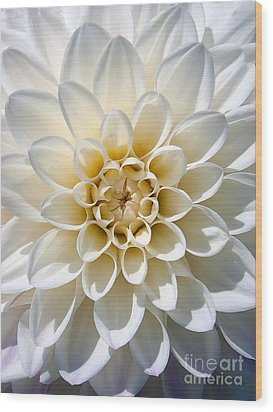 Wood Print featuring the photograph White Dahlia by Carsten Reisinger