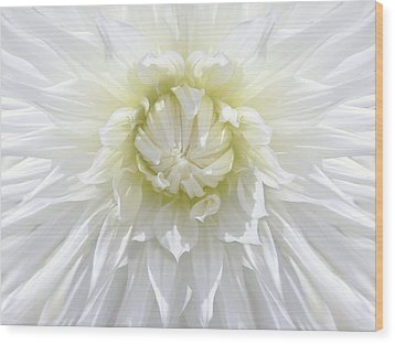 White Dahlia Floral Delight Wood Print by Jennie Marie Schell