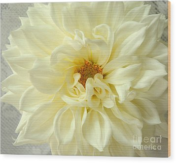 White Dahlia Wood Print by Olivia Hardwicke