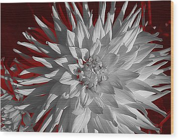 White Dahlia Wood Print by Richard Farrington