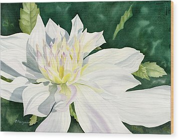 White Dahlia - Transparent Watercolor Wood Print