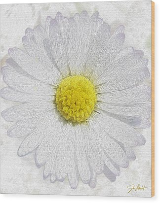 White Daisy On White Wood Print by Jon Neidert