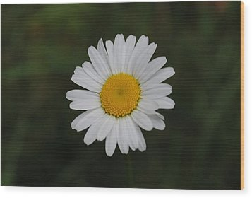 Wood Print featuring the photograph White Daisy by Robert  Moss