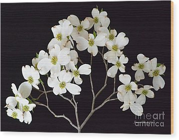 Wood Print featuring the photograph White Dogwood Branch by Jeannie Rhode