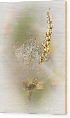 White Dryas  Wood Print by Heiko Koehrer-Wagner