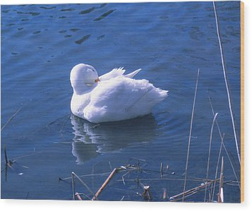 Wood Print featuring the photograph White Duck by David Klaboe