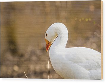 White Duck Wood Print by Eleanor Abramson