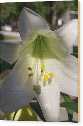 Wood Print featuring the photograph White Easter Lily by Belinda Lee