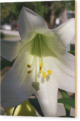 White Easter Lily Wood Print by Belinda Lee